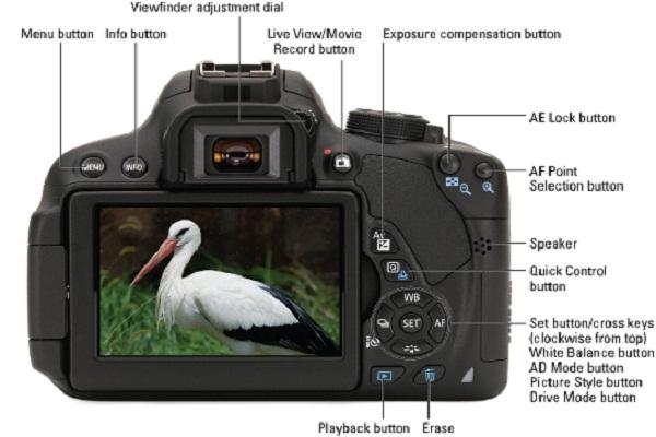 Popular Cameras